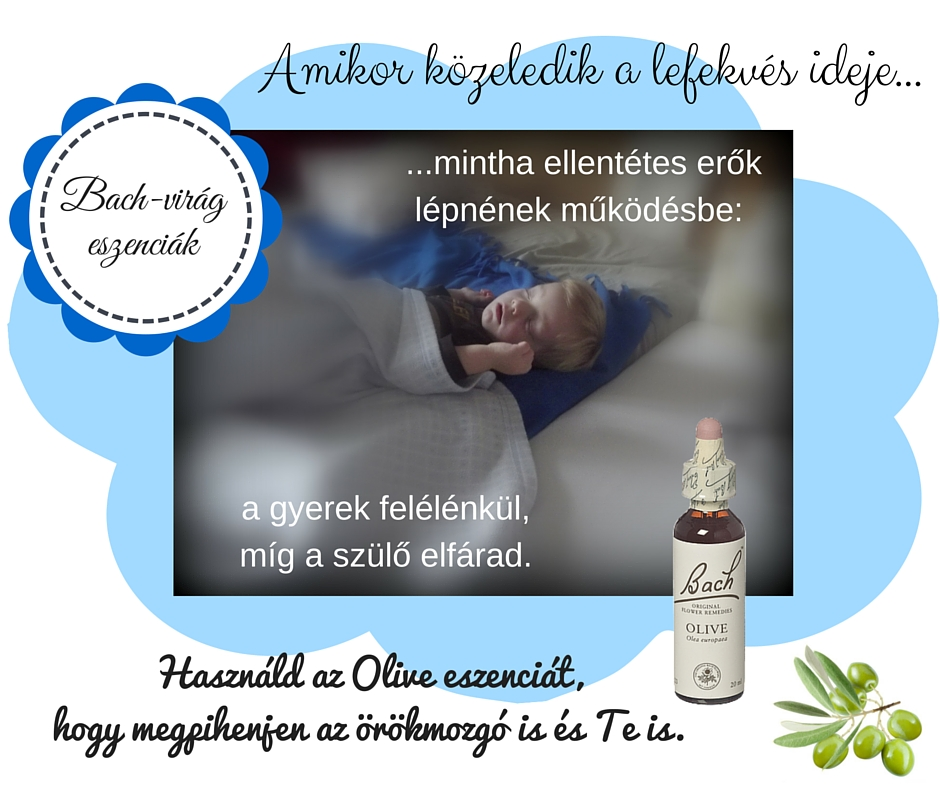 Olive eszencia - Bach